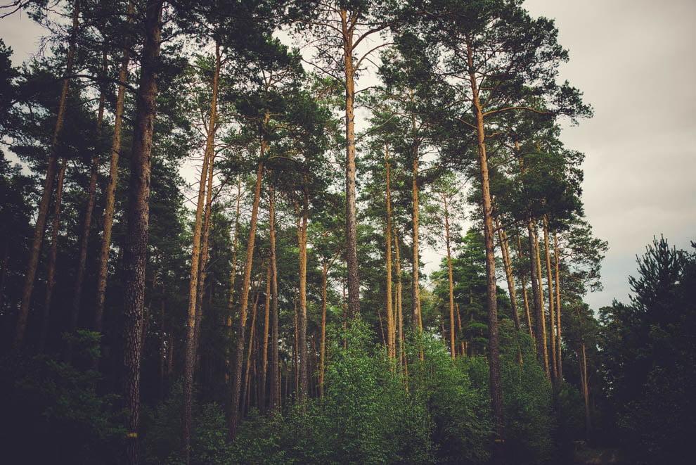 sesja slubna w lesie 1 - Sesja ślubna na łonie natury