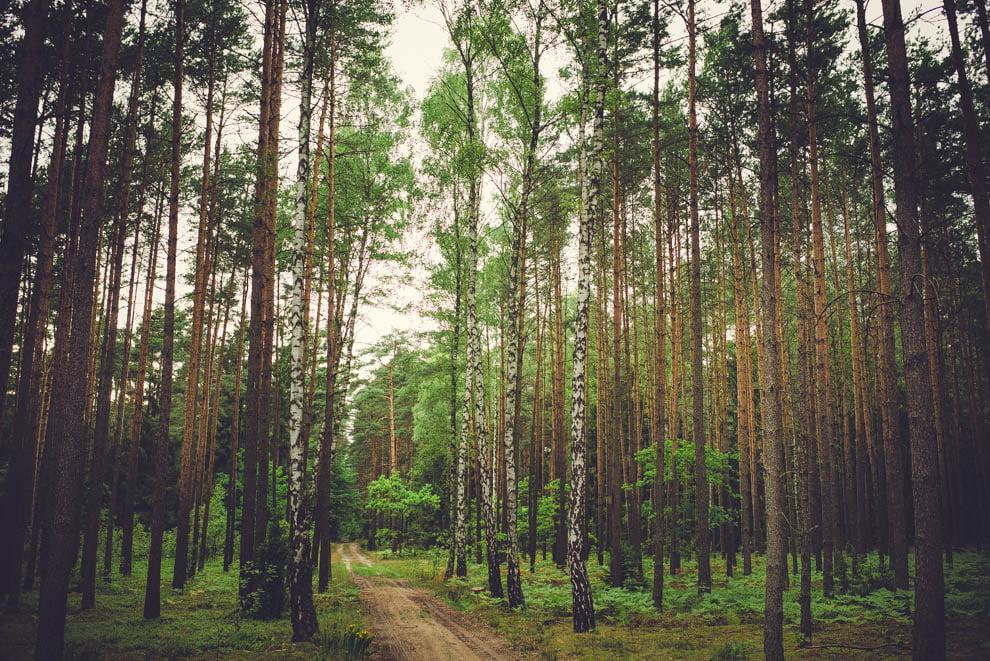 sesja slubna w lesie 2 - Sesja ślubna na łonie natury